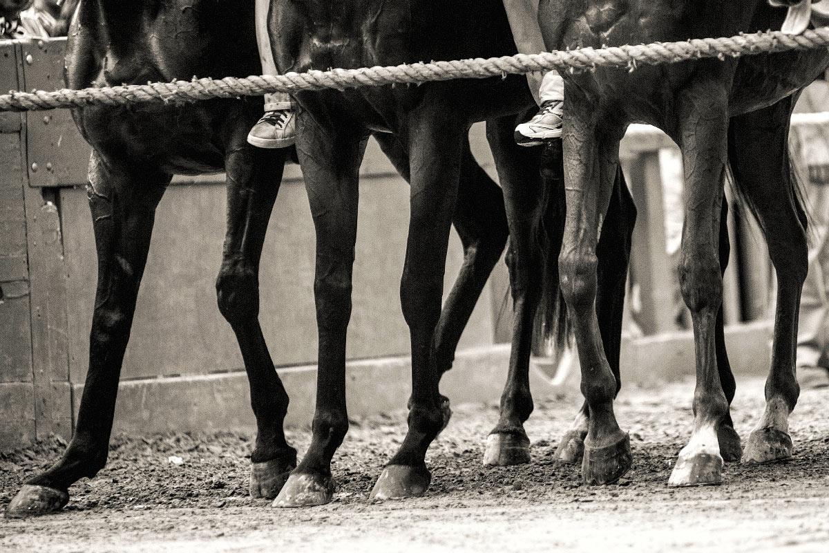 Foto Palio di Siena - Cavalli al Canape